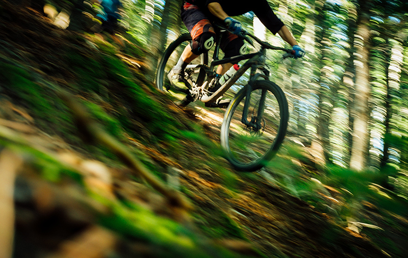 A person mountain biking in a forest.