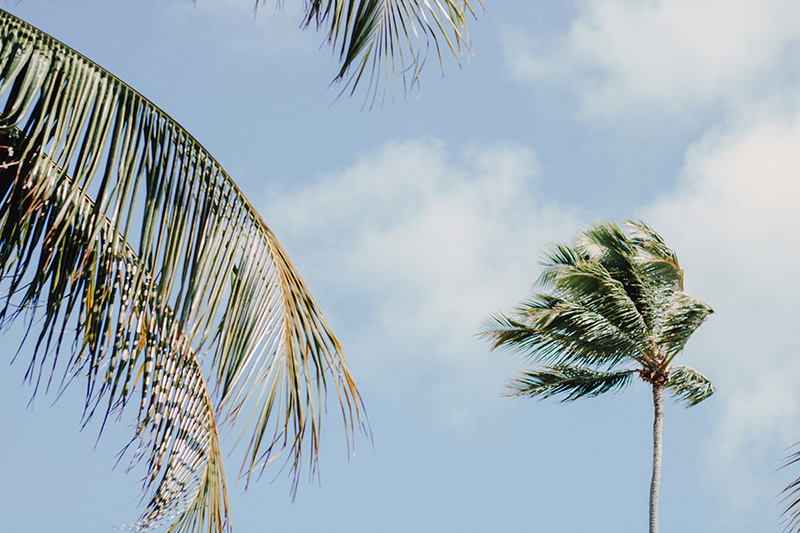 Palm trees with fronds swaying in the wind.