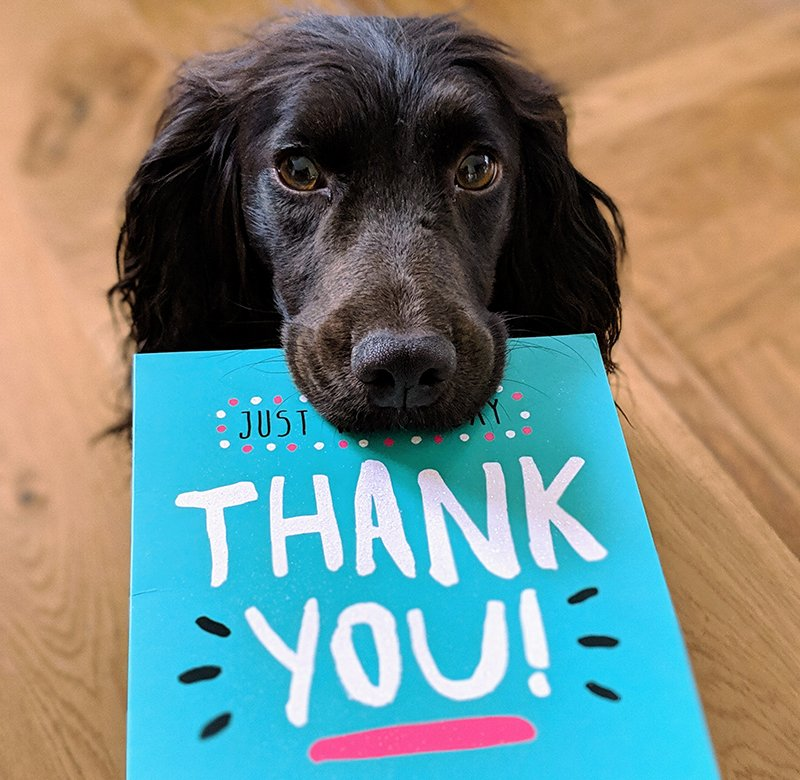 A black dog holding a blue thank you card in its mouth